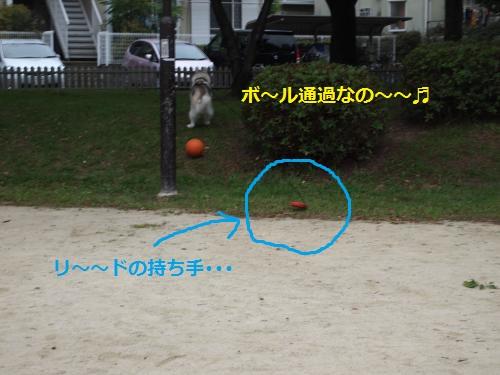 P7010774_convert_20120706111445.jpg
