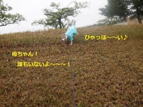 P7030811_convert_20120712211047.jpg
