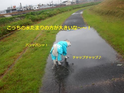 P7030825_convert_20120712215130.jpg