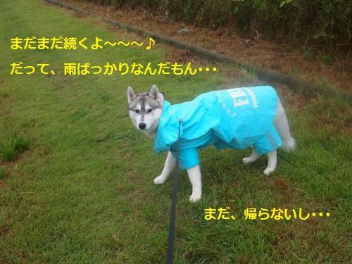 P7030846_convert_20120712215537.jpg