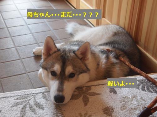 P7040875_convert_20120713222438.jpg