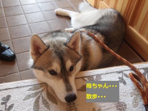 P7040879_convert_20120713224137.jpg
