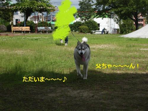P7160047_convert_20120726140443.jpg