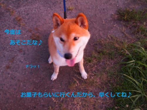 P7180086_convert_20120719124209.jpg