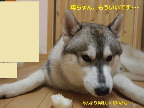 P7200166_convert_20120815140251.jpg