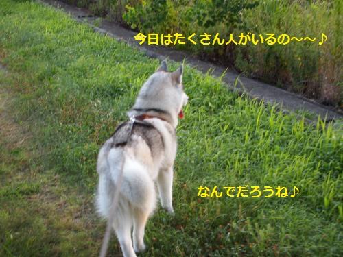 P7310202_convert_20120801091434.jpg