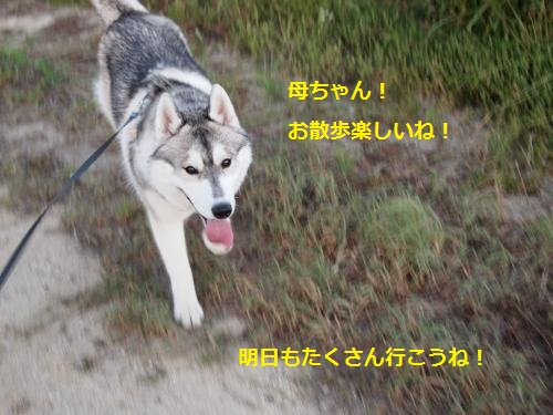 P7310210_convert_20120801091710.jpg