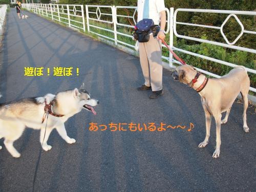 P7310215_convert_20120801091124.jpg