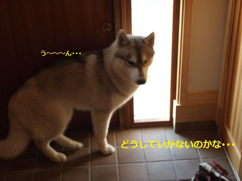 P8030225_convert_20120806223158.jpg