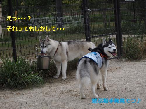 P8050246_convert_20120808205105.jpg