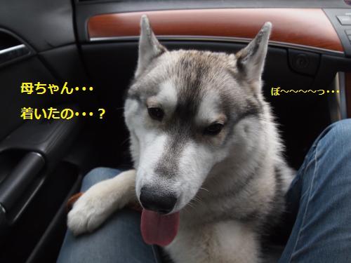 P8050370_convert_20120811100945.jpg