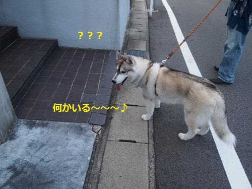 P8120496_convert_20120816195657.jpg