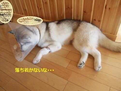 P8190529_convert_20120819162946.jpg