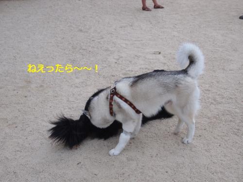 P8260621_convert_20120908140836.jpg