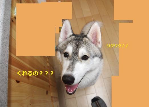 P8290685_convert_20120830203558.jpg