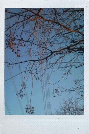 Dec_4_2010_137sarusubwerin.jpg