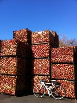 20101205CAAD10とリンゴ