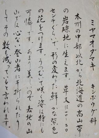 DSC04348ミヤマオダマキ右