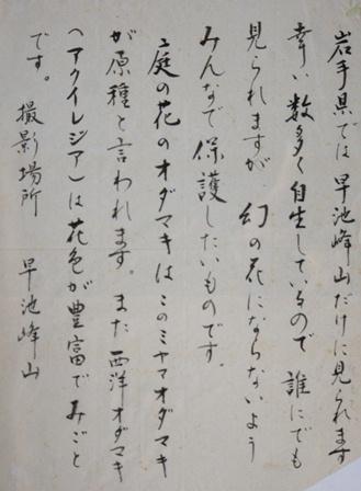 DSC04350ミヤマオダマキ左