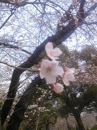 桜2.20jpg