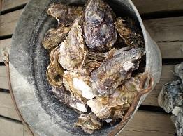 殻付き牡蠣.8jpg