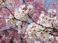 春は必ずくる
