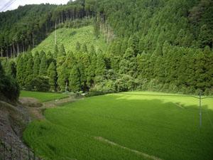 七山 (8)