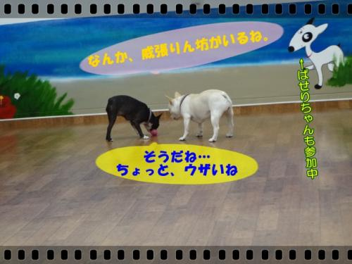 2012_0613_122201-DSC03629.jpg