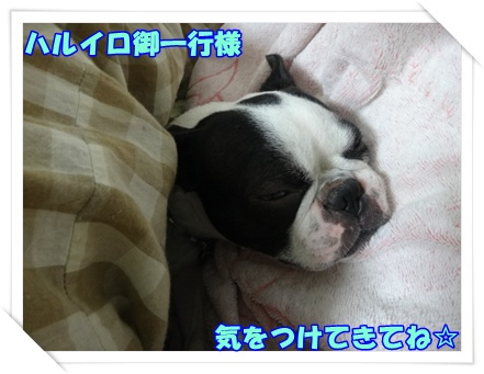 2012_0614_012400-DSC03648.jpg