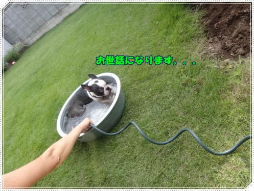 2012_1006_143505-DSC04236.jpg