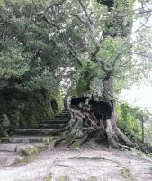 多宝塔への登り口