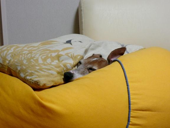 チワはすでにノビノビ状態で寝てます