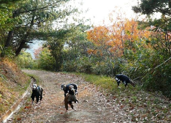 前へ後ろへ、無駄に走り回る犬達。いい運動になってよろしい。