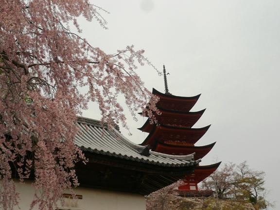 枝垂れ桜が綺麗でした♪