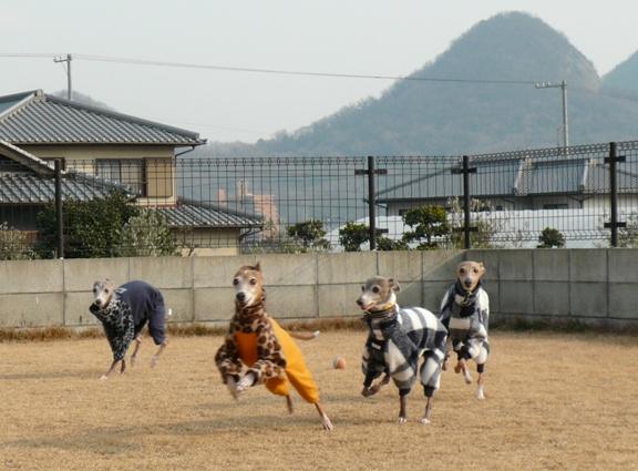 チワも一緒に走っている写真は、りっぺさんのブログに載せてくれてました♪