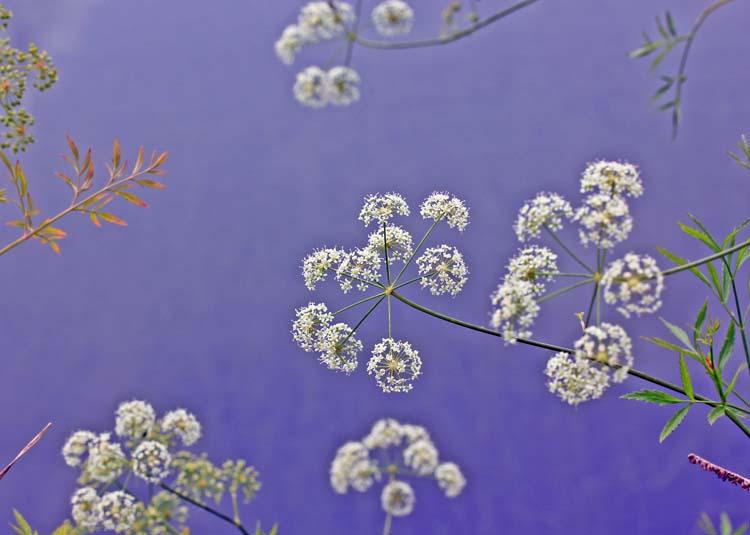14komadeike_flower_06.jpg