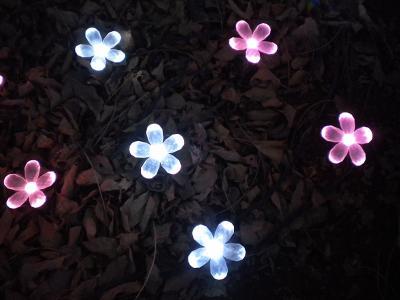 お花もキラキラ