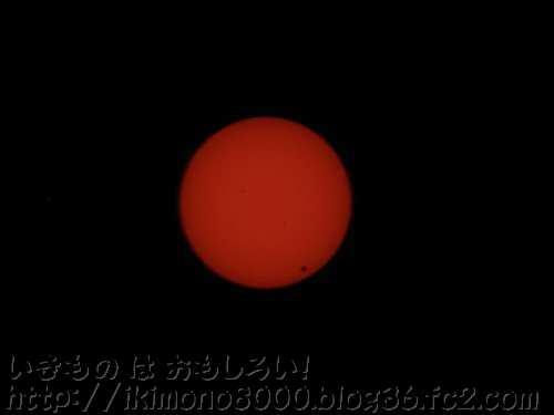 1日と1年のサイクルをつくる太陽(正しくは地球の自転と公転ですが)