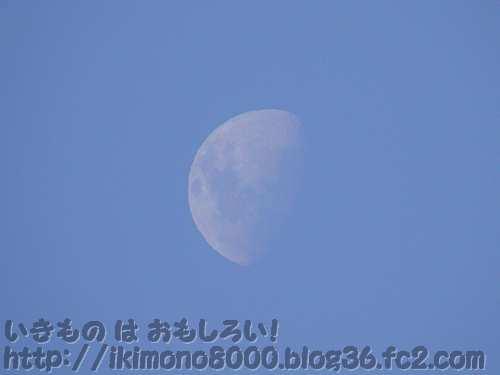 海の干満の周期をつくる月