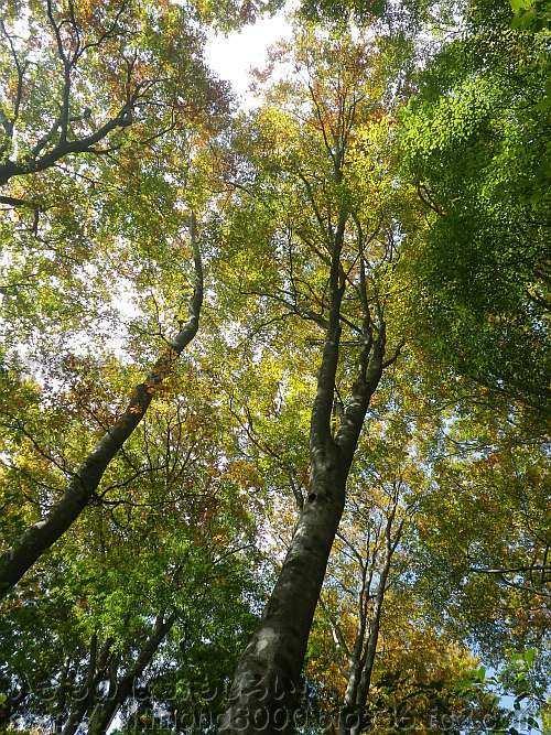 まだ緑の葉も残っています