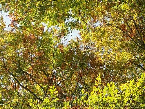 高木から低木まで黄葉しています