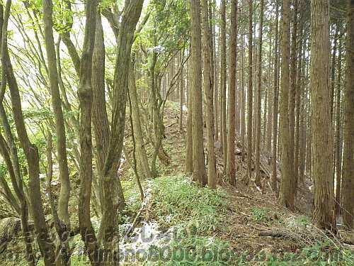 広葉樹と針葉樹の間を歩くサネ尾