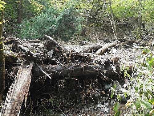 流木で塞がれてしまったモミジ谷支流の小さな滝