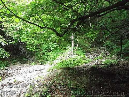 木々に覆われていた下流から見たモミジ谷本流支流の分岐点(2012年)