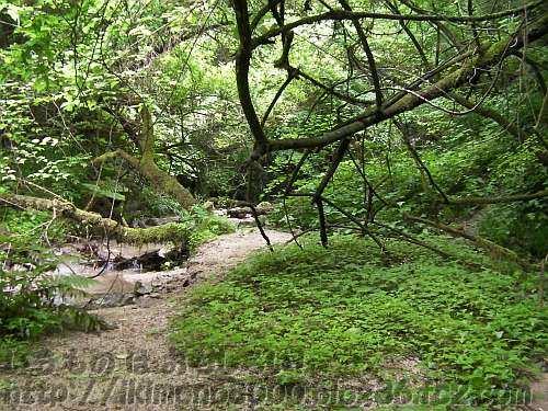 もとはこんなに草と木に覆われていた第4堰堤の上(2012年)