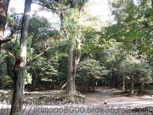極相に近づいている奈良公園の森の林床