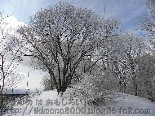 「地が凍る」イメージの大阪最高地点のちはや園地(1月下旬)