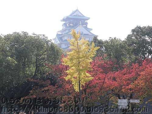 黄葉している銀杏と紅葉している桜と鉄筋コンクリートの天守閣