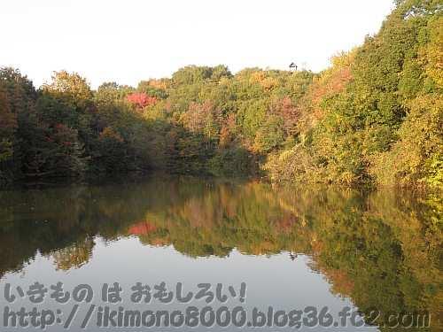 奥の池から見た池に映る紅葉
