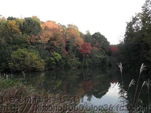 南浦谷池の静かな紅葉